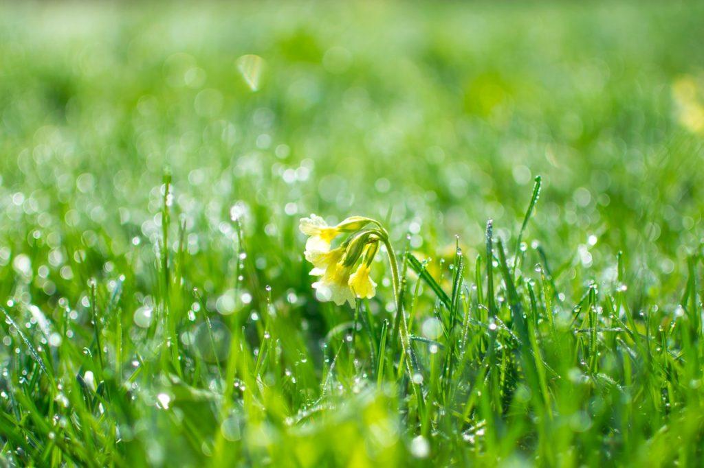 pic-nic in giardino