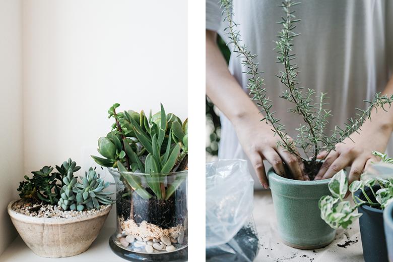 cura delle piante, piante grasse